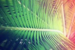 palm leaves ,chromo therapy color