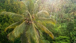 Palm tree in the rainforest. Natural background. Jungle view