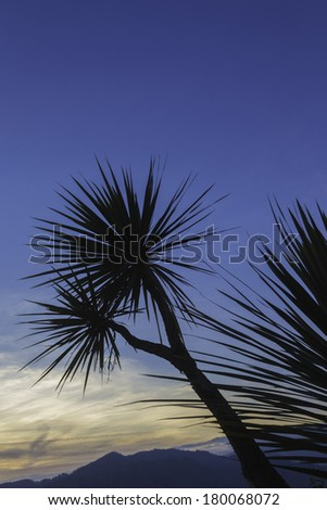 Palm trees silhouetted against a blue sky, mountains in the distance / Palm tree Silhouette