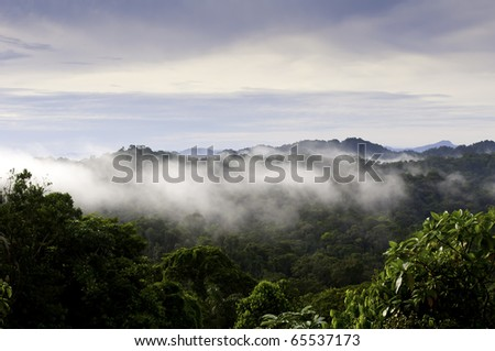 Panama jungle vista.