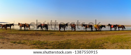 Panorama view of Horses waiting for a horseback-riding traveler in the grasslands,Zhang Bei grassland, Heibei, China  #1387550915