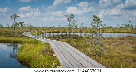 Panoramic bog landscape. Boardwalk path through wetlands area. Boardwalk in Ingatsi study trail. Soomaa National Park. Estonia. Baltic.