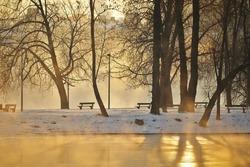 Park in morning fog, Prague, Czech Republic