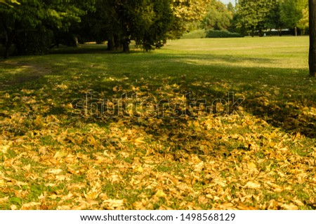 park with green field and yellow leaves and dry, trees, dry leaves, green grass  , autumn is approaching, the leaves of the trees begin to yellow, autumn with yellow leaves in the city park, sunshine