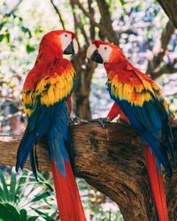 2 parrots having a discussion.