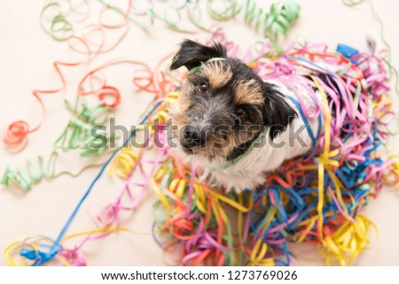 Party Dog. Jack Russell ready for carnival #1273769026