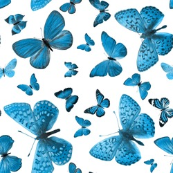 pattern of blue butterflies isolated on white background