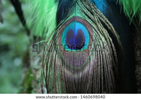 Peacock feather. Feathers of birds. For decor and crafts. #1460698040
