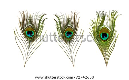 Peacocks feather with copy-space for text - stock photo