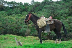 Peasant working horse on Colombian farms