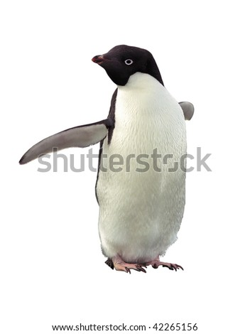 Penguin Adelie isolated on white with clipping path