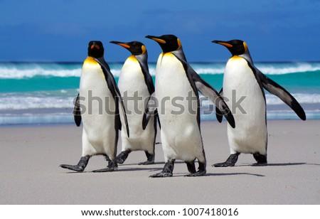 4 Penguins on beach