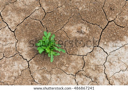 Perseverance and resilience green weeds grew in a waterless desert. Сток-фото ©