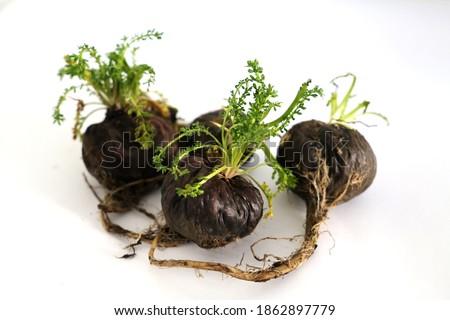 Peruvian Maca root aphrodisiac for health on white background Stock foto ©