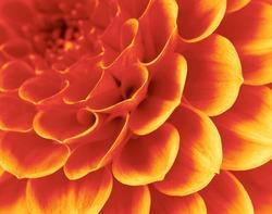 petals of a flower
