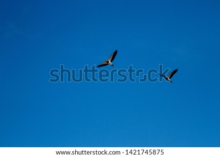 photo of birds flying sky blue