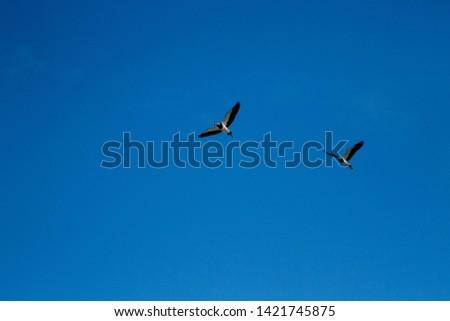 photo of birds flying sky blue