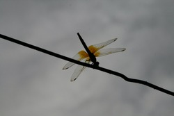 photo of dragon fly insect