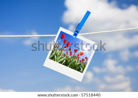 photo with tulips hanging by a rope