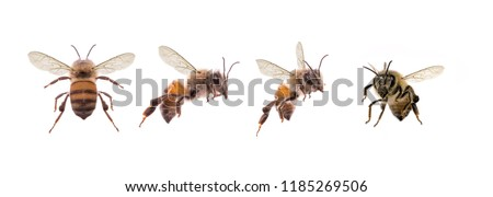 picture of bees on white background, bee on backs flying and other details, macro photography of insects #1185269506