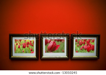 picture of flowers with  frames on red  wall