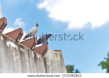 Pigeons perched on the wall