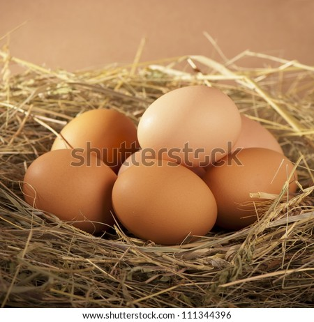 pile of brown eggs in a nest