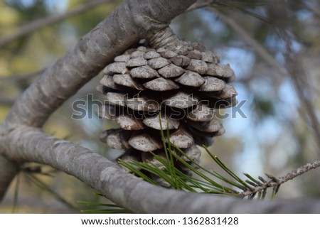pine needles and pine cones #1362831428