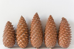 5 pinecones on white background, 5, five pinecone family closeup, group, christmast ornament pine tree pineal gland traditional symbol