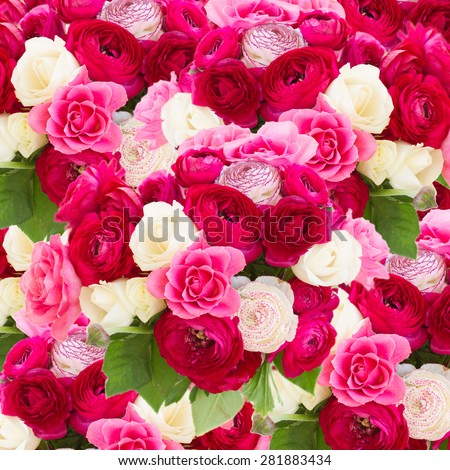 pink  ranunculus and rose flowers  close up  background