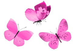 pink tropical butterflies isolated on a white background. moths for design