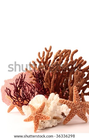 """Pisaster ochraceous""starfish and coral aquarium decoration elements on white background with copy space"