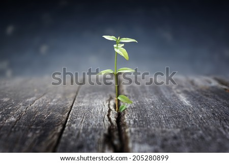 plant grows in old wood and symbolizes struggle and restart