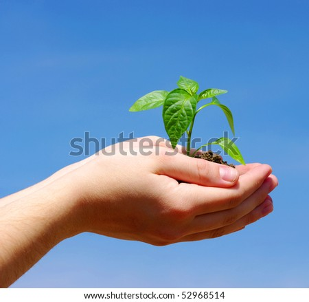 plant in the hands on sky
