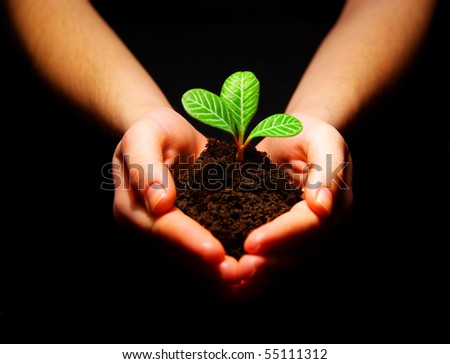 plant on a black - stock photo