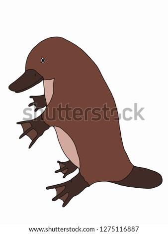 platypus ornithorhynchus   animal illustration