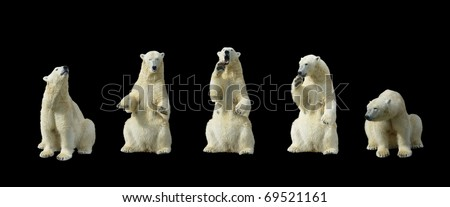 Polar bears standing on hind legs  isolation on black background