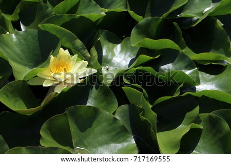 Pond lily in small lake in garden of The Benedictine Pannonhalma Archabbey, Hungary  Stock fotó ©