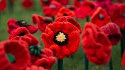 62,000 Poppies - Australian War Memorial - Canberra - Australia