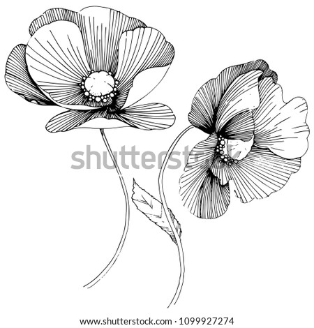 poppy. Floral botanical flower. Wild spring leaf wildflower isolated. wildflower for background, texture, wrapper pattern, frame or border. #1099927274