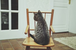 portrait cute tabby kitten sitting on an old baby chair inside a house