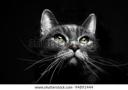 portrait of a beautiful grey cat looking to the right