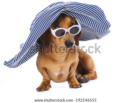 Portrait of Dachshund in sunglasses, Dog in hat