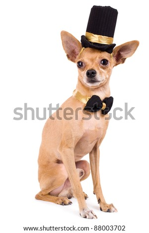 portrait of the nice terrier in a top hat - stock photo
