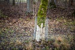 Protection grids against beaver damage