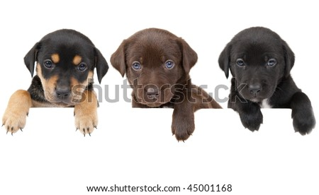 3 puppies showing their paws above white banner