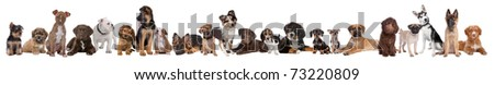 22 puppy dogs in a row in front of a white background - stock photo