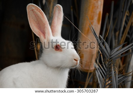 \'Pure and Innocent\'\ The feelings that a rabbit can create in everyone\'s hearts.