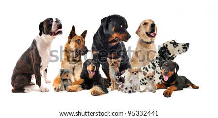 purebred  little and large dogs in a white background