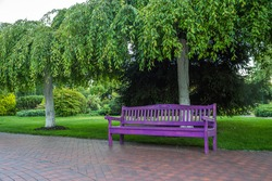 Purple bench in the park in the summer.